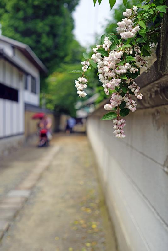 at Hakata Fukuoka(御供所町;順心寺)