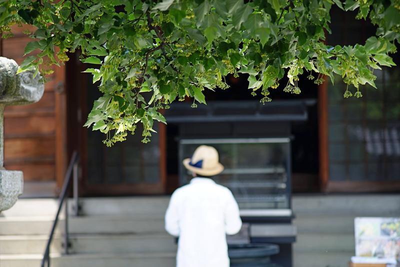at Higashi-ku Fukuoka(恵光院;菩提樹)