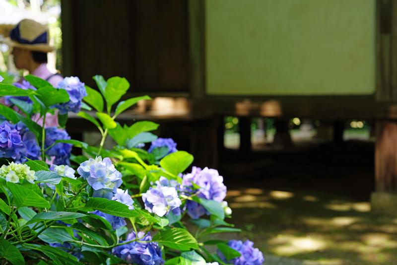 at Hofu Yamaguchi(阿弥陀寺)