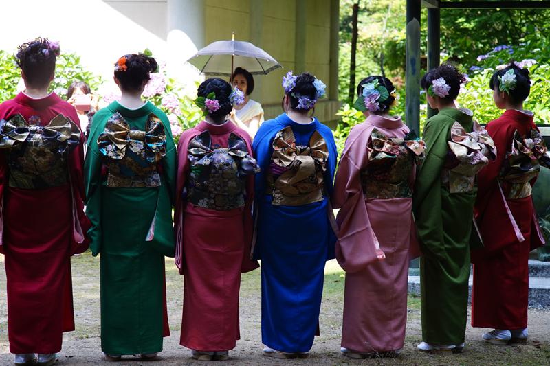 at Hofu Yamaguchi(阿弥陀寺;紫陽花の七変化)