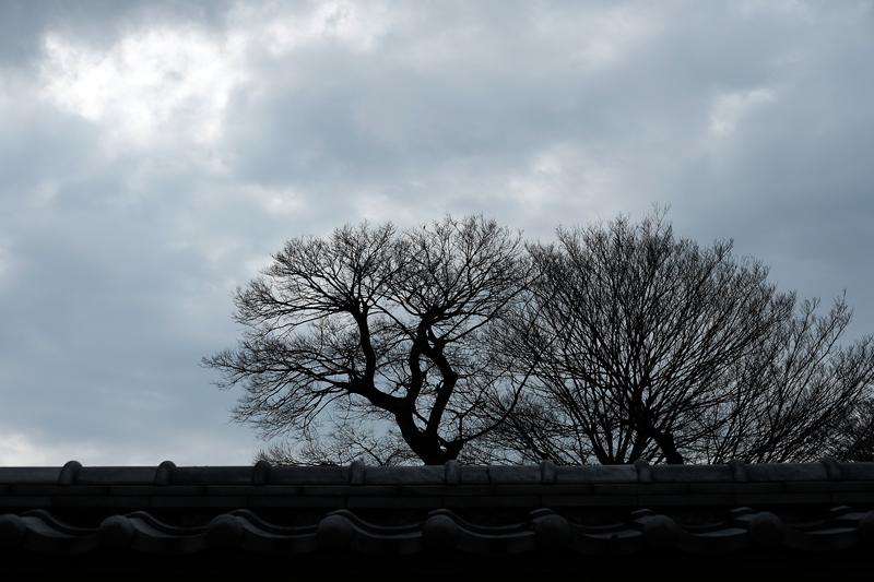 at Hakata Fukuoka(聖福寺)