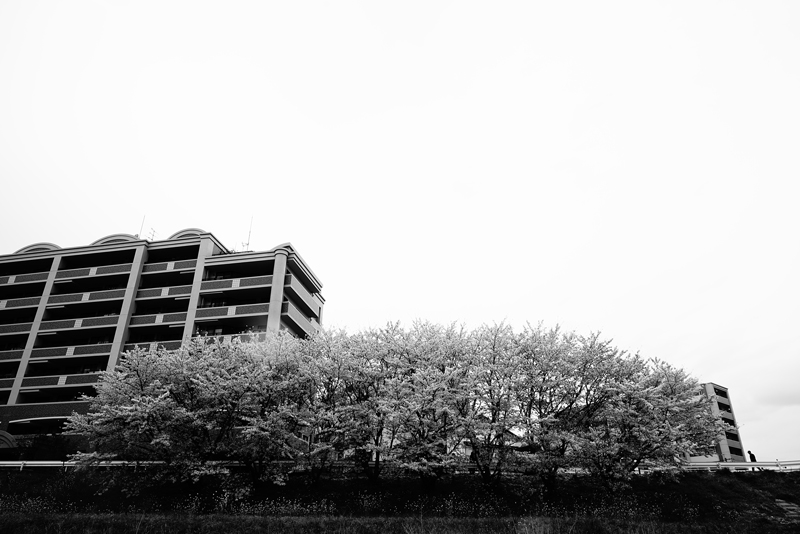 at Minami-ku Fukuoka