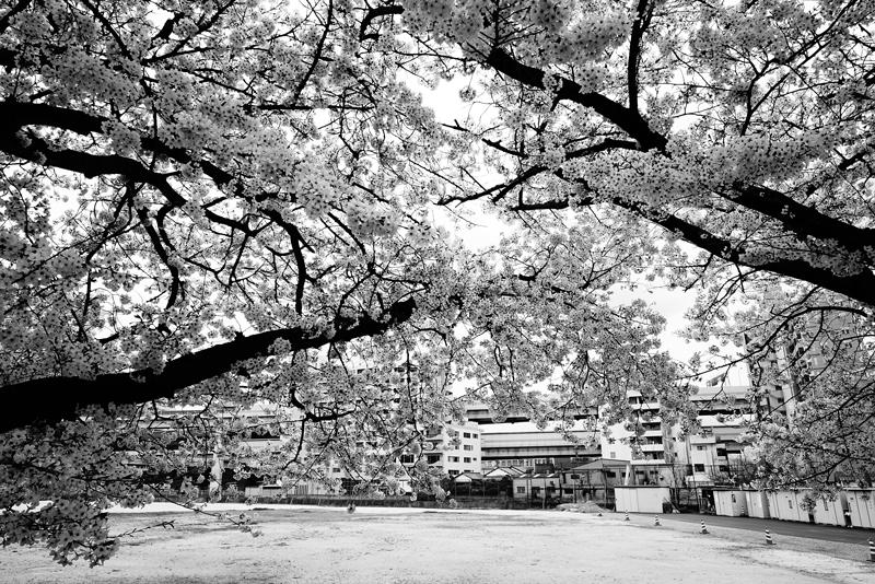 at Hakata Fukuoka(御供所町;節信院横の空き地)