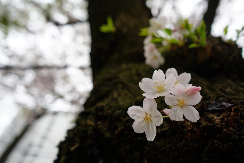 at Hakata Fukuoka(御供所町;聖福寺)