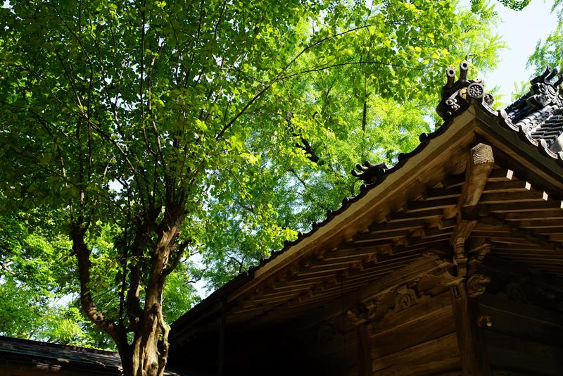 at Kiyama Saga(綾部神社)