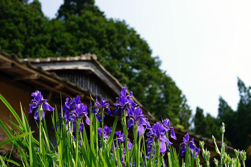 at Akiota Hiroshima(井仁棚田)
