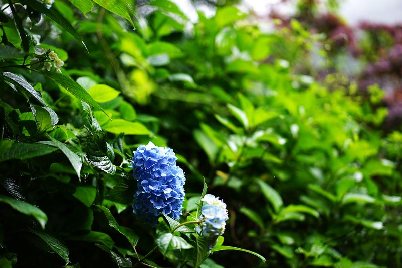 at Ochi Saga(見返りの滝)