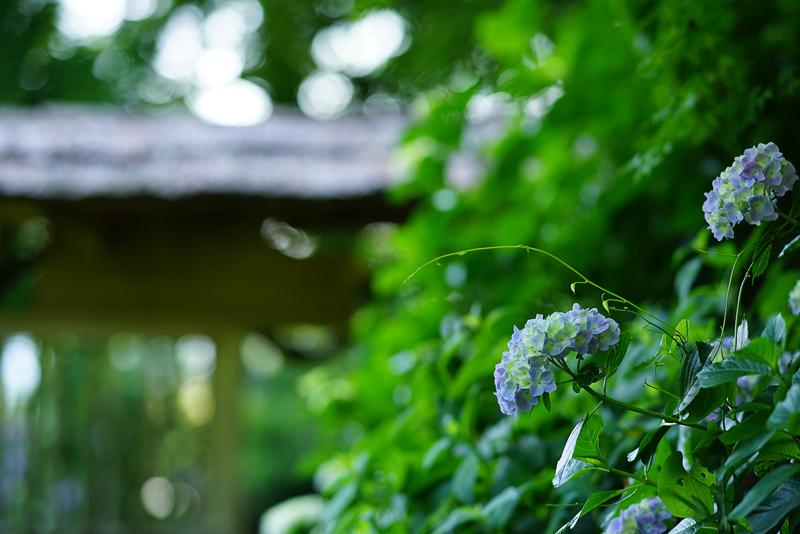 at Izumi Kagoshima