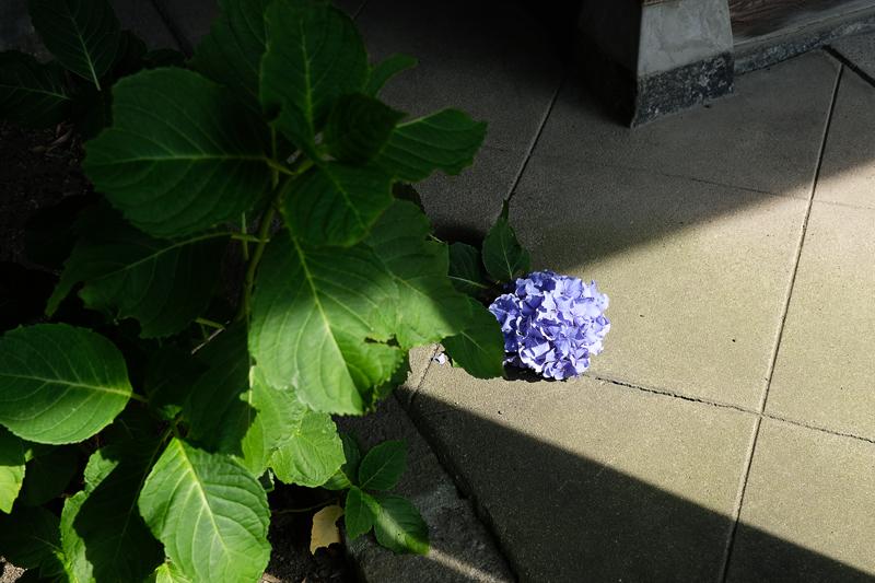 at Hakata-ku Fukuoka(御供所町;順心寺)