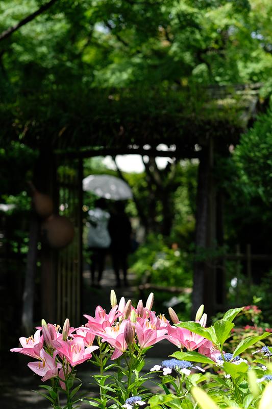 at Higashi-ku Fukuoka(筥崎宮花庭園)
