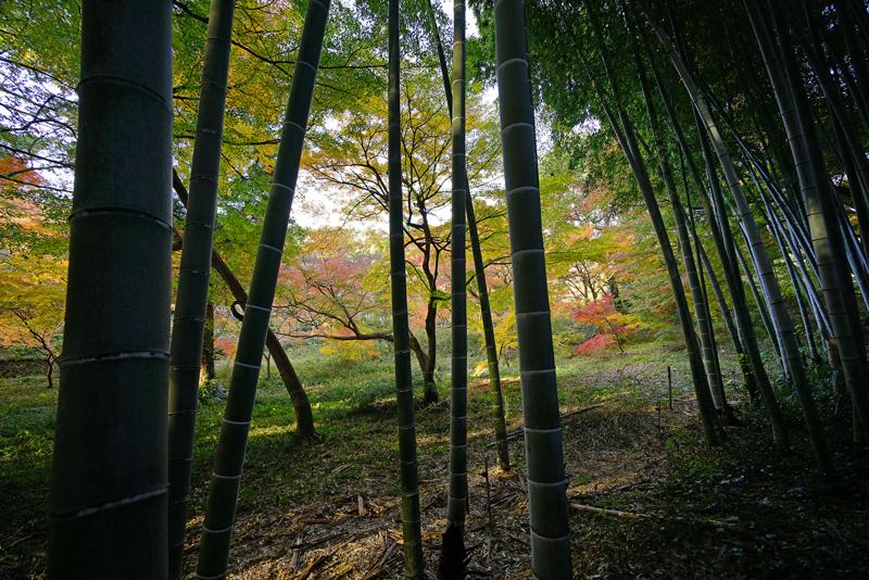 at Hofu Yamaguchi(毛利氏庭園)
