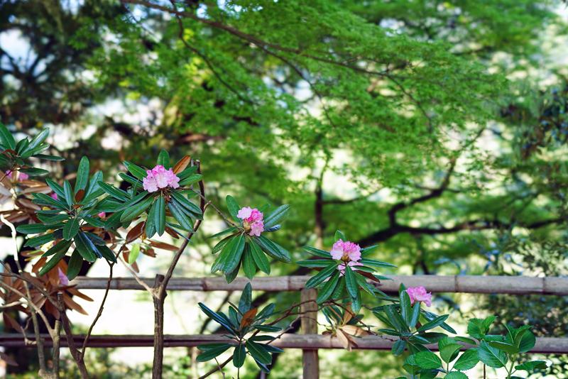 at Kiyama Saga