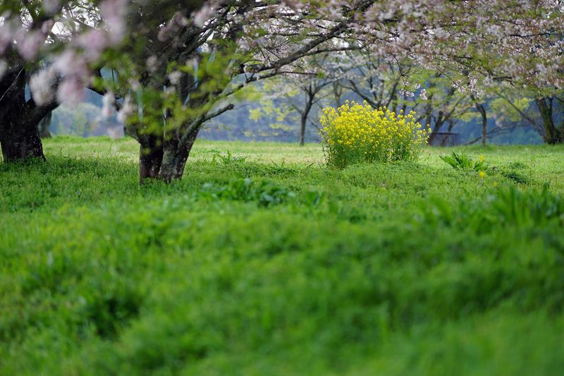 at Taketa Oita