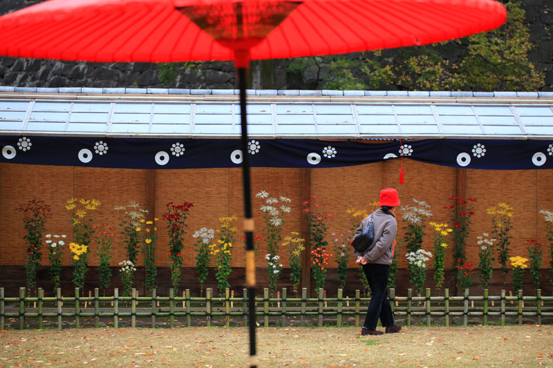 at Kumamoto Castle 赤い菊・傘・帽子